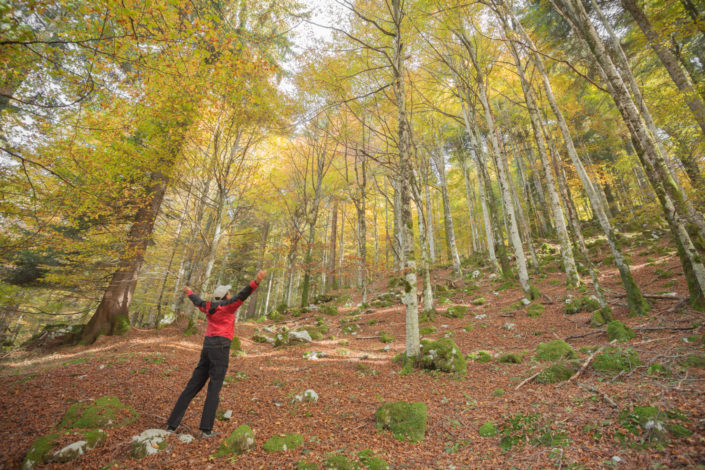 Forest of Cansiglio: Bus de la lum