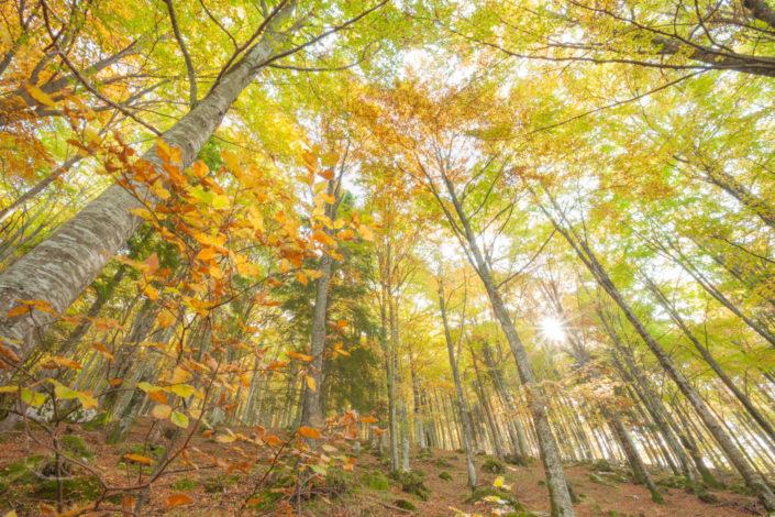 Inside a beech forest in Alpago